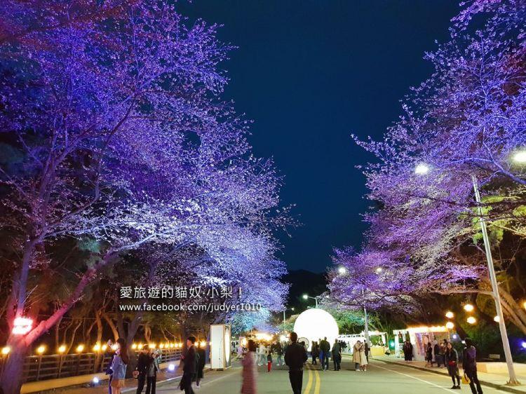 首爾賞櫻\賽馬公園櫻花慶典,限定期間賞夜櫻!