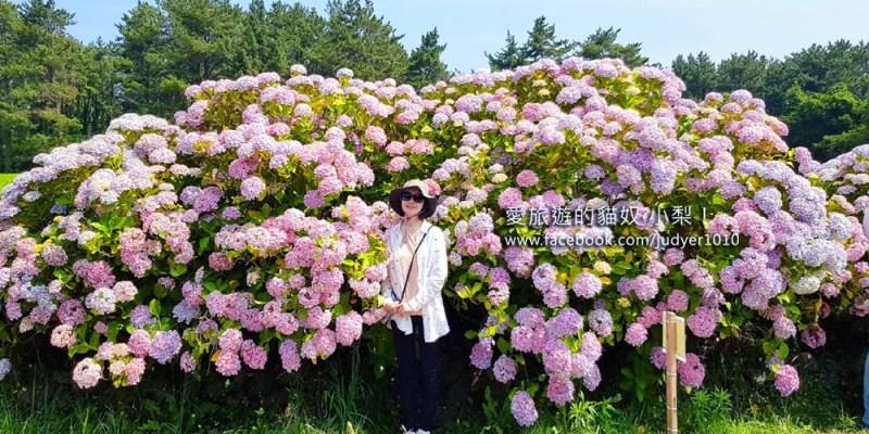 濟州島濟州市景點\抗蒙遺址繡球花拍照點!