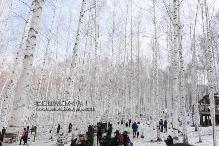 麟蹄院垈里白樺林\冬季必去韓版的銀白忘憂森林~《家師父一體》《經常請吃飯的漂亮姊姊》拍攝地之一