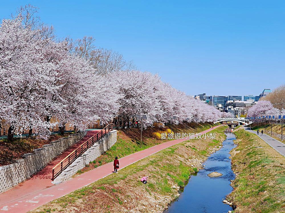 韓國首爾賞櫻\良才川(汝矣川)賞櫻,清楚地圖、照片路線帶你去!