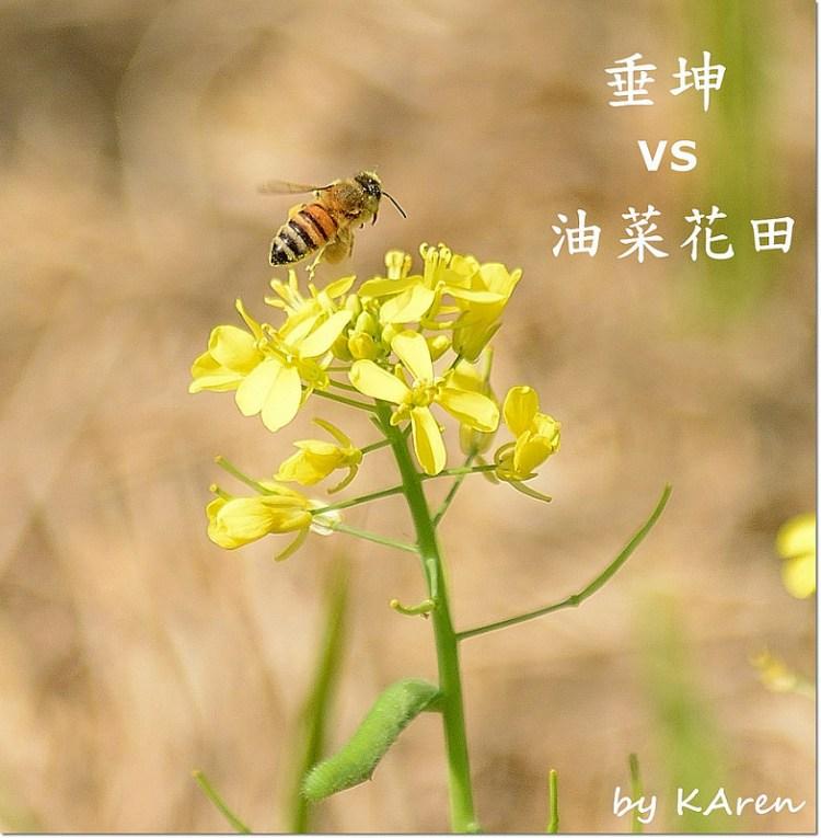[苗栗。苑裡] 垂坤肉鬆店總店+旗艦店 VS 油菜花田 2020年menu