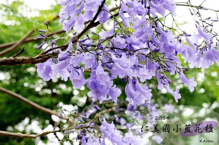 [台中。北屯區] 2014仁美國小藍花楹 (4/21)
