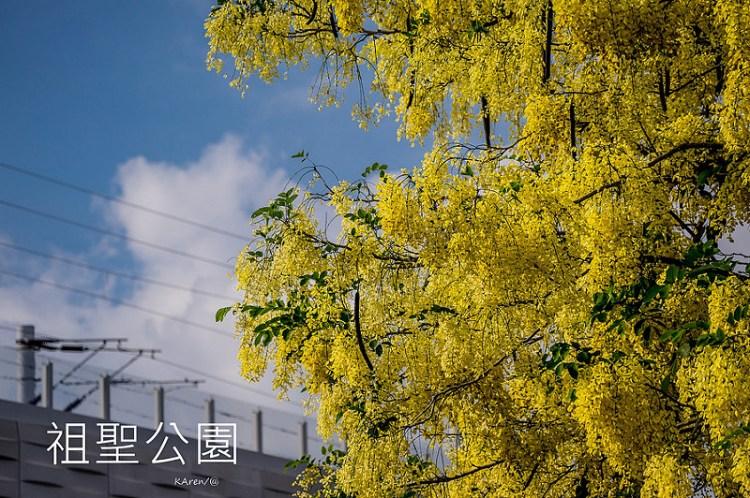[台中。東區] 2015 祖聖公園 阿勃勒 (06/11)