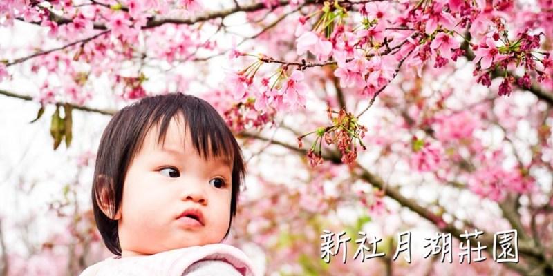 櫻花 | 台中新社 |月湖莊園。百株吉野櫻粉紅盛開,浪漫粉色彷彿小小武陵