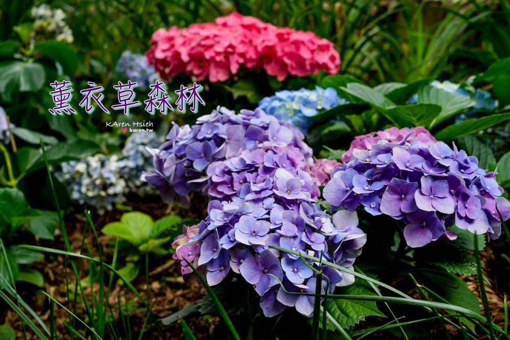 薰衣草森林   繡球花正美,浪漫約會景點
