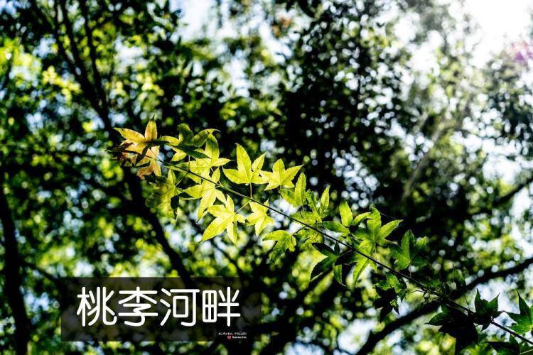 桃李河畔 | 1Y8M 雙寶遊記