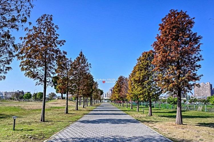南興公園(萬坪公園) | 落羽松大道 v.s 米奇芒果樹 IG熱拍點 (NIKON Z6試拍)