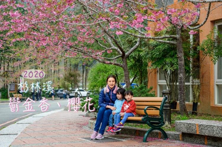 杉林溪 | 鬱金香、櫻花