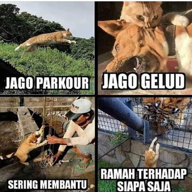 10 Meme Lucu Kocheng Oren Kucing Bar Bar Viral Yang Bikin Ngakak