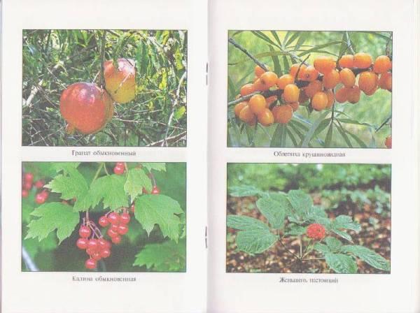 """Книга: """"Красная книга России. Растения."""" - Ольга Ушакова ..."""