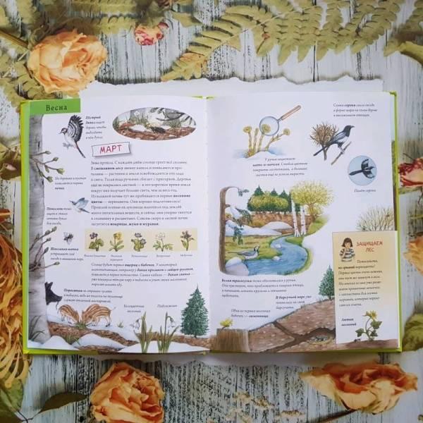 Иллюстрация 40 из 52 для Лесной календарь. Животные и ...