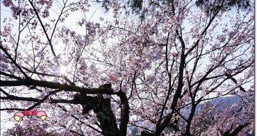 嵐山公園賞櫻》美到過分的粉嫩雪白,開滿了枝頭,讓旅人快門抓下,櫻花季京都,自由行必來(日本櫻花季花況)