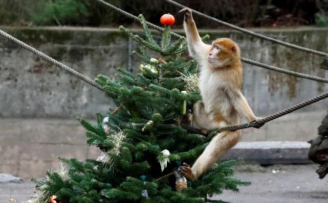 """China registró una muerte por el letal virus """"B"""", proveniente de los monos - LA GACETA Tucumán"""