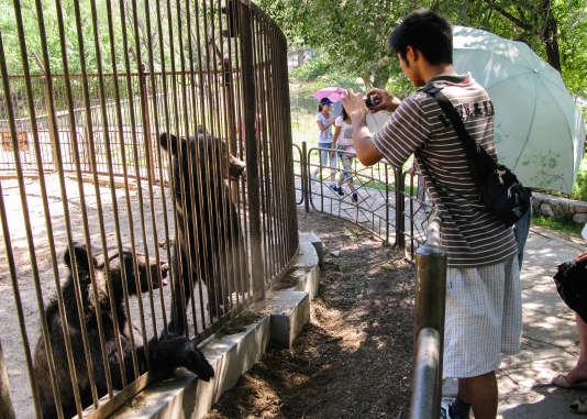 Des ours capturés pour permettre aux touristes de visiter leurs parcs.