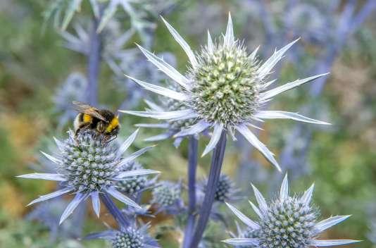 Dans chaque exploitation, l'état de santé de trois espèces de pollinisateurs a été suivi pendant un à deux ans.