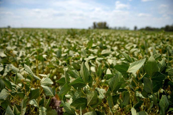 Soybean field in Argentina, in 2018.