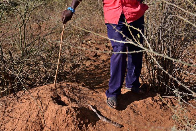 Au Kenya, Jackson Chepkui a vu sa fille,âgée de 2 ans, mourir d'une morsure de vipère heurtante et a réussi à sauver sa seconde fille in extremis en parcourant plusieurs dizaines de kilomètres de nuit en février 2019.