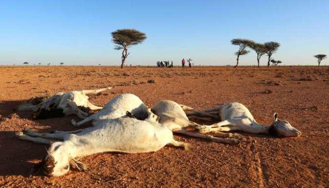 Sécheresse dans la région du Puntland, dans le nord-est de la Somalie, en décembre 2016.