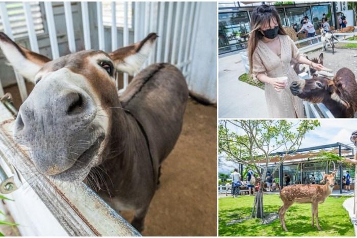 宜蘭景點 》星寶鄉間小路 超可愛小驢農場,史瑞克電影裡的迷你驢!