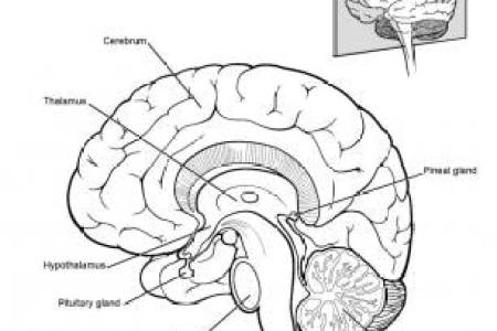 Interior areas of brain full hd maps locations another world cranial nerves human brain and its parts biology youtube human brain neuroscience cognitive science cerebral cortex video khan academy brain human ccuart Image collections