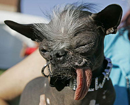 You are so ugly if you have this ugly dog