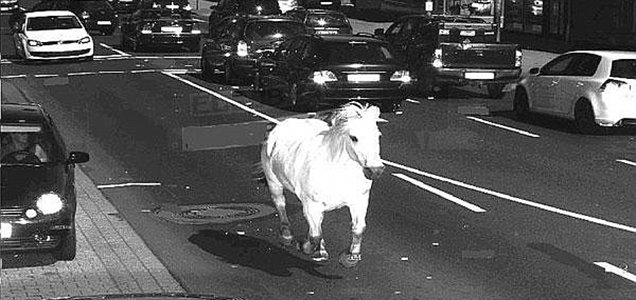 Horse caught by speed camera in Germany