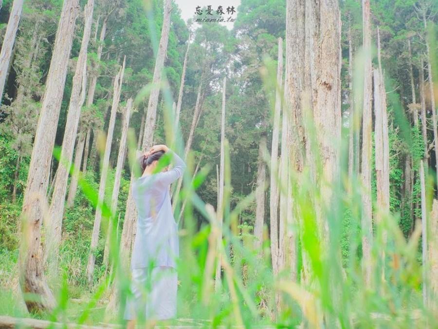 南投景點》台灣絕美秘境「忘憂森林」,如雲似霧的迷幻森林