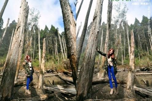 南投》忘憂森林怎麼去:一輩子一定要去一次即將要消失的夢幻秘境,冬天版