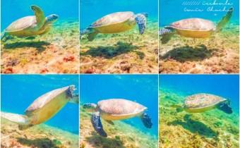 宿霧》杜馬蓋地阿波島看海龜游泳超級可愛近距離接觸 一定要去