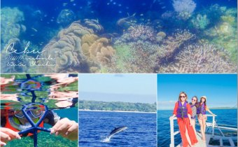 宿霧》薄荷島一定要去巴里卡薩大斷層浮潛 追海豚找海龜超幸福