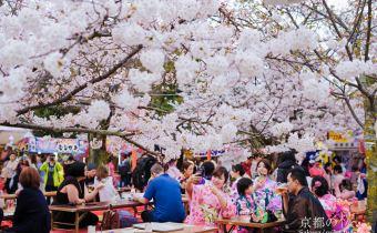 京都賞櫻》円山公園日夜櫻都好美 放鬆感受在櫻花樹下野餐的樂趣
