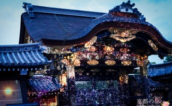京都賞櫻》二条城夜櫻燈光秀 櫻花古城結合夢幻光雕動畫 切記要滿開再去