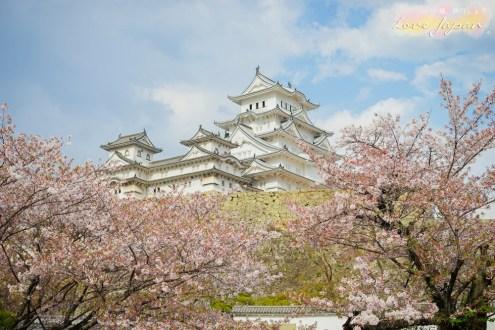 日本》世界遺產姬路城 日本三大名城之一保存度最完整的城堡 世界文化遺產之一