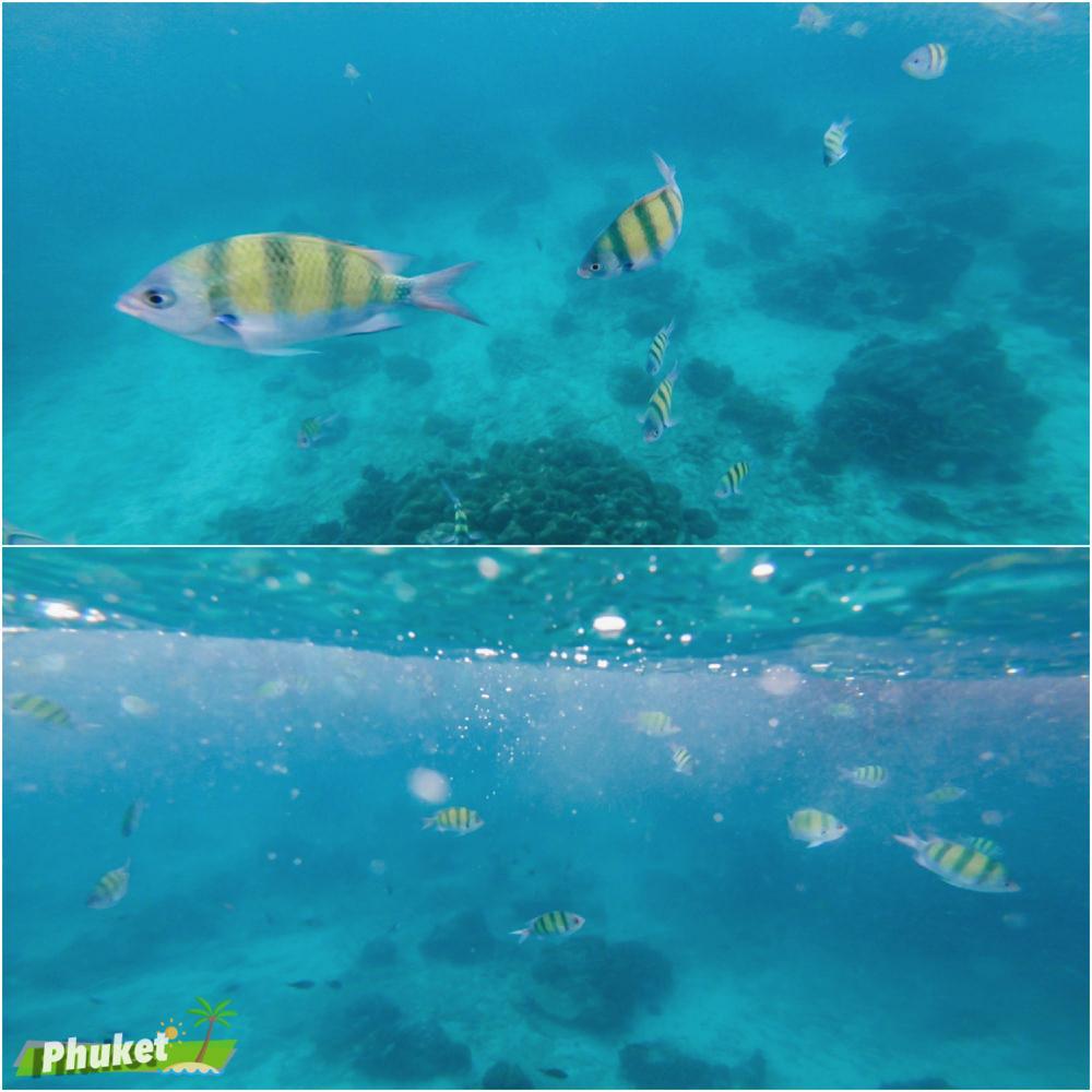 普吉島自由行,普吉島pp島,普吉島跳島,普吉島好玩,普吉島出海,普吉島浮潛,普吉島海豚