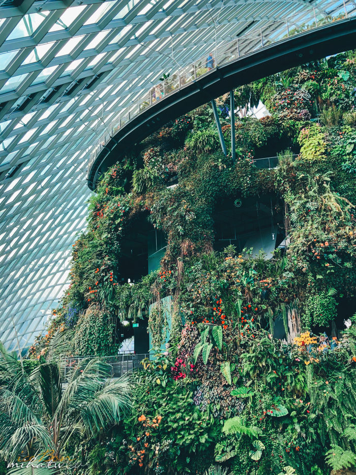 濱海灣花園,冷室,新加坡景點,新加坡好玩,新加坡自由行,新加坡燈光秀,雲霧林花穹