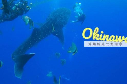 沖繩潛水看鯨鯊該去嗎?我最難過想哭的一次潛水