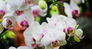 【台南景點】山上.蘭花植物園:台南山林裡花團錦簇,賞蘭花還能喝午茶~
