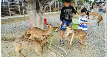 墾丁必玩景點》墾丁鹿境:不用衝奈良,在台灣就能被小鹿斑比包圍啦!梅花鹿就是萌萌der