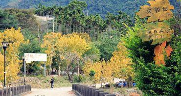 【南投景點】台灣也能賞楓去!南豐村《楓林社區》滿村的黃金楓樹,無料景點,請尊重村民們的生活。