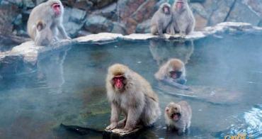 【長野】地獄谷野猿公苑(附交通):湯田中站出發,看猴子泡溫泉好療癒,入選日本必訪十大景點
