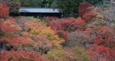 【京都賞楓景點】東福寺:交通搭乘京阪電車,必拍通天橋紅葉,楓紅顏色也太美了!