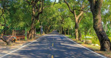 【南投景點】集集綠色隧道&集集線火車:一眼望不到盡頭的樟樹林蔭大道~