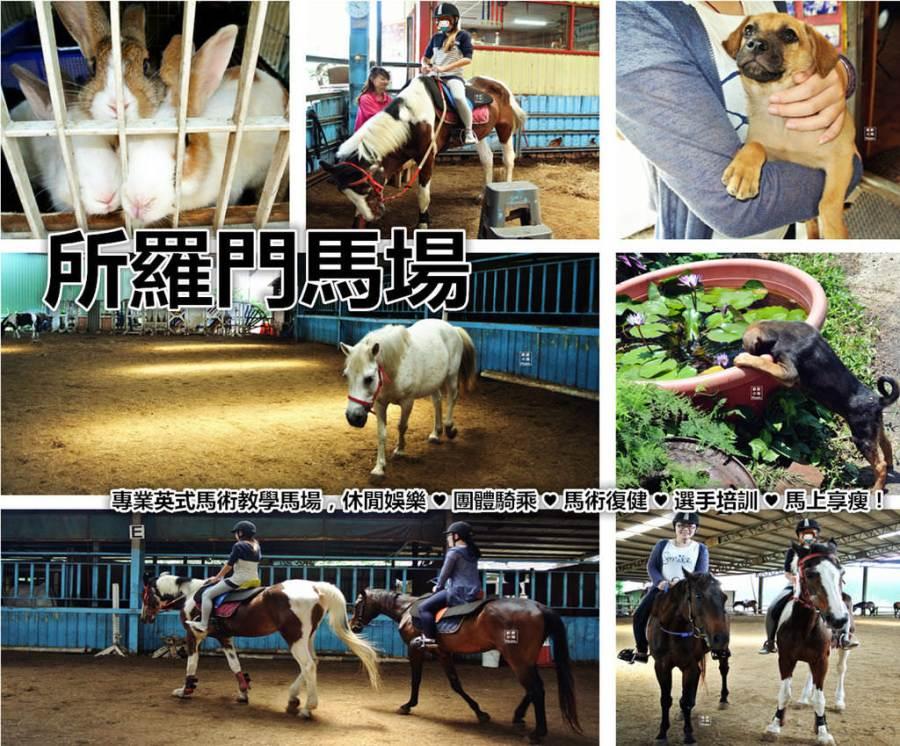 新竹竹東騎馬 所羅門馬場 英式馬術教學 馬術復健 選手培訓 馬上享瘦