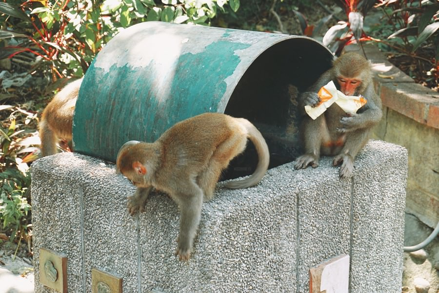 高雄鼓山景點【壽山動物園】Shou Shan Zoo!遊園車.親水廣場玩水.零距離野生猴子搶食.親子同遊.老少咸宜