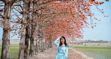 彰化木棉花景點 竹塘木棉花道:IG火紅木棉花道,紅綠相間 花季二月底盛開中
