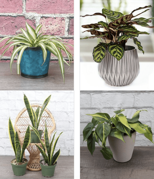 succulents and houseplants.