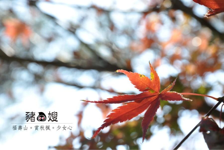 │台中│福壽山賞秋楓。楓紅了誰的少女時代?