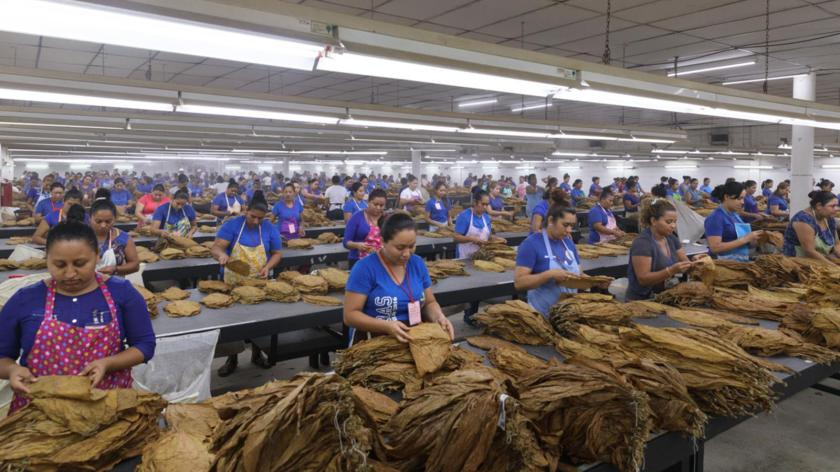 [Update] Covid-19: Cigar Factories React to Viral Outbreak