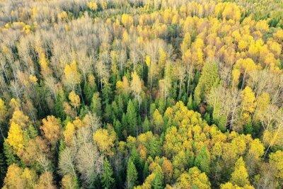 Collaborative forest landscape restoration program carousel. Autumn Forest Landscape View From A Drone Aerial Photography Vaggdekor Landskap Gron Parkera Myloview Se