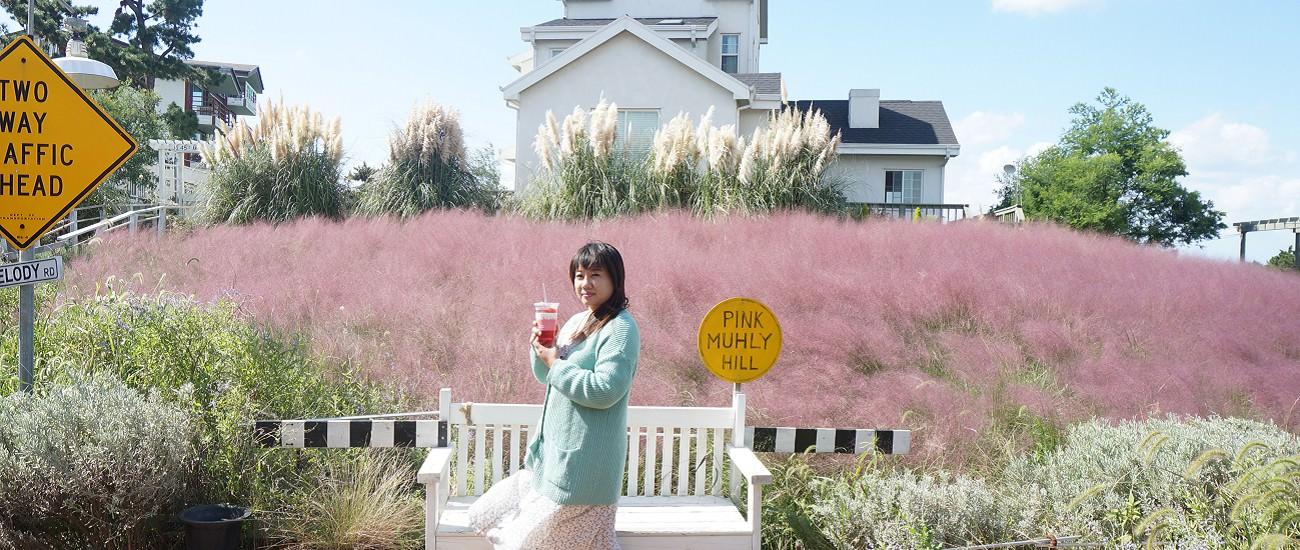 濟州島/粉色芒草/OZ廚房